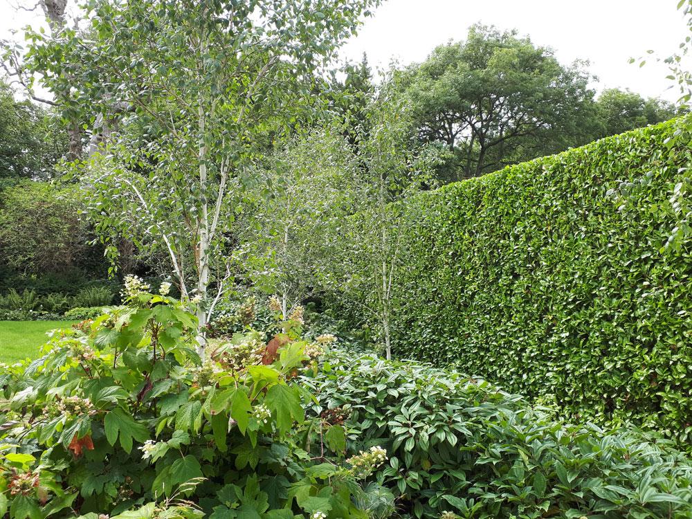 A laurel wall