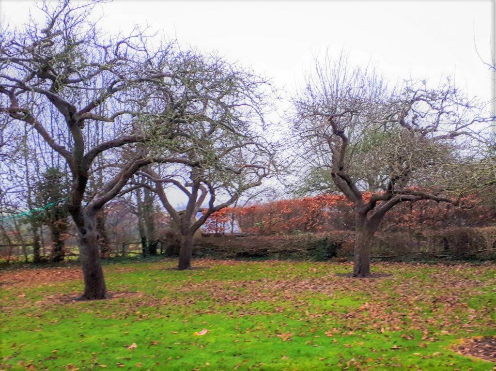 Veteran orchard management